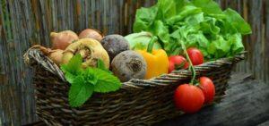 ernährung stoffwechsel tipps